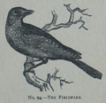 Picture Natural History - No 94 - The Fieldfare.png