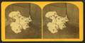 Pigs, by Kilburn Brothers 6.png