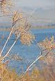 PikiWiki Israel 17213 Plants of Israel.jpg