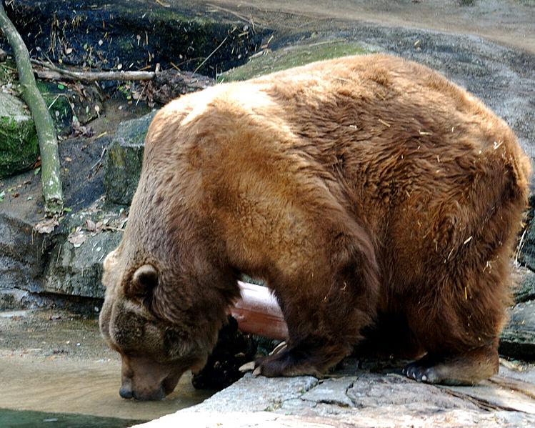 File:Pittsburgh Zoo (4509862994).jpg