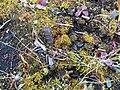 Plants and Iron Post (22339032000).jpg