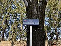 Plaque Rue 11 Novembre 1918 - Mâcon (FR71) - 2021-03-01 - 2.jpg