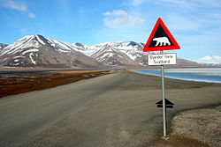A sign warning of polar bears on a road in Svalbard