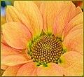 Pollen Coming Soon (220063161).jpeg