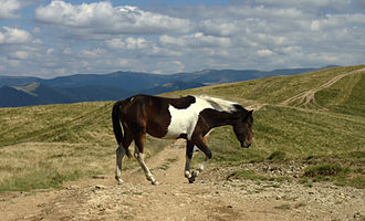 Carpathian Mountains - A horse atop the Krasna mountain range in Ukraine's Zakarpattia Oblast