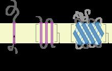 cuatro tipos de proteinas y su funcion