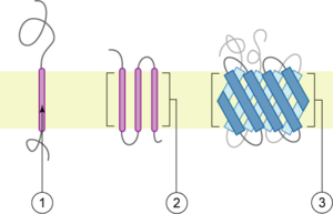 Transmembrane protein