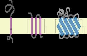 Transmembrane protein - Image: Polytopic membrane protein