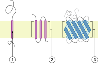 Transmembrane protein protein spanning across a biological membrane