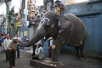 Manakula Vinayagar Temple - Image: Pondicherry Manakula Vinayagar Temple elephant