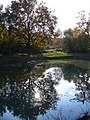 Pool by Britten's Pond - geograph.org.uk - 602181.jpg