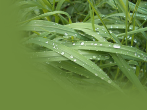 Portal head umwelt- und naturschutz.png