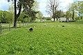 Prairie de Jaumeron à Gif-sur-Yvette le 29 avril 2015 - 15.jpg