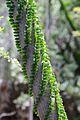 Pretoria Botanical Gardens-038.jpg