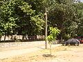 Prilep i Makedonski Brod vo 2012 (7).JPG
