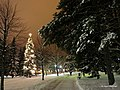 Puotunpuiston joulukuusi, Puotunpuisto and Christmas tree - panoramio.jpg