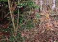 Quarry Moor (106).JPG