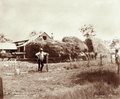 Queensland State Archives 3980 Hay stacking Green Hills Farm near Warwick 16 November 1894.png