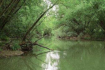 Río Pisuerga en la provincia de Palencia.jpg