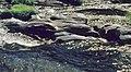Río Sorbe 1975 13.jpg