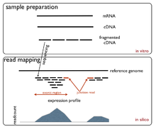 Single-cell transcriptomics - Wikipedia
