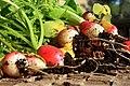Radishes just harvested.jpg
