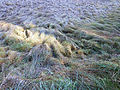 Ramsar Site Mires of Pass Thurn 13.JPG