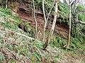 Red sandstone at Ardgowan - geograph.org.uk - 326229.jpg