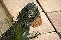 Reptiles JIHI 021.jpg