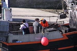 Retour de la pêche à la seiche du fileyeur Jason IV (5).JPG