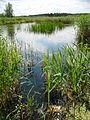 Rezerwat Bagno Nadrowskie.jpg