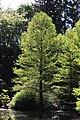 Rhododendronpark Bremen 20090513 079.JPG