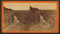 Rice fields, by Havens, O. Pierre, 1838-1912 2.png