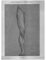 Richer - Anatomie artistique, 2 p. 97.png