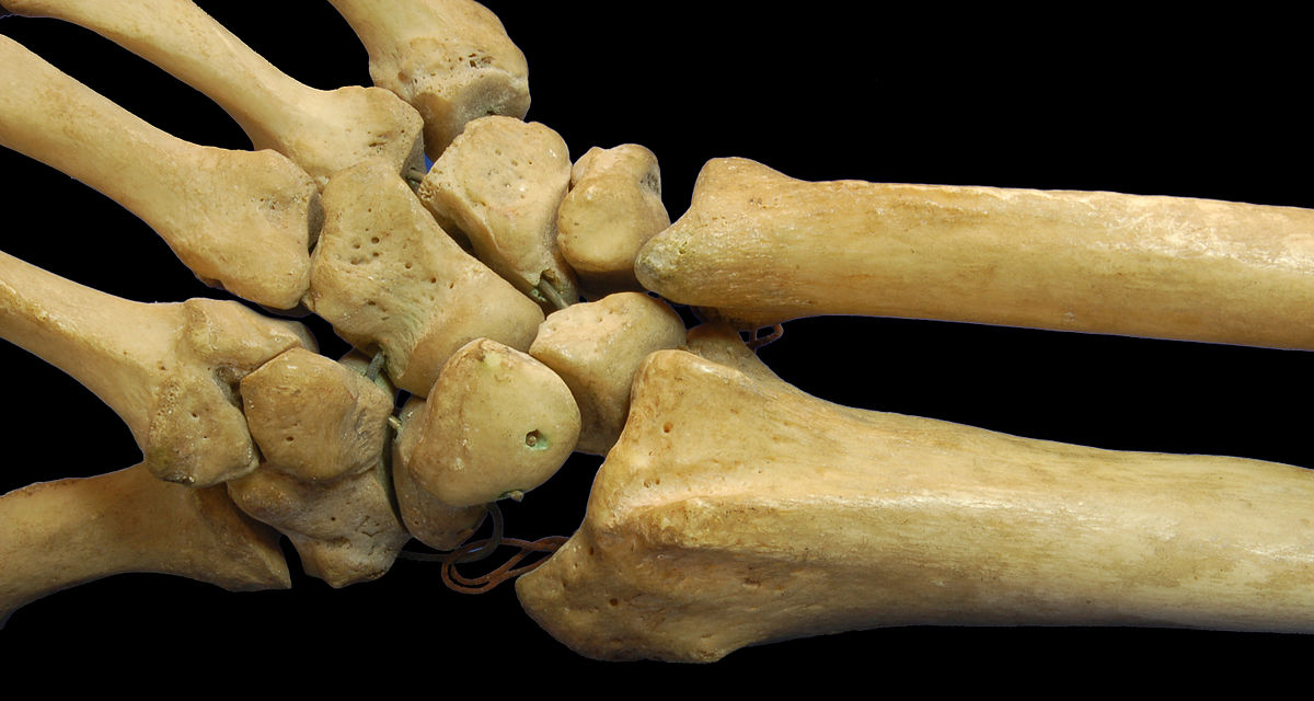 Short Bone Wikipedia