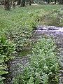 Rivière (Les Planches-près-Arbois) (5).jpg