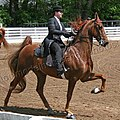 Rock Creek Spring Horse Show 2008 (2674577258).jpg