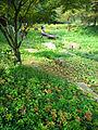 Rokko alpine botanical garden12s2816.jpg