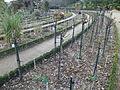 Roseraie en mars (parc du Thabor, Rennes).JPG