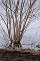 Rouge River wetlands (8627815279).jpg