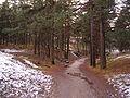 Sütiste mets Mustamäe.jpg