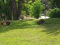 Saint-Jacut-les-Pins - Tropical Parc (24).jpg