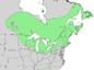 Salix lucida range map 3.png