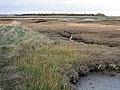 Salt marshes south of Skipper's Island - geograph.org.uk - 603351.jpg