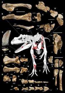 <i>Saltriovenator</i> genus of dinosaur (fossil)