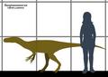 Sanjuansaurus SIZE.png