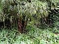 Sankyo Garden - DSC01284.JPG