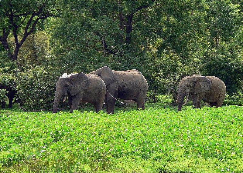 File:Savanna landscape, Northern region, Ghana.jpg
