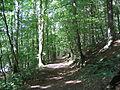Schwarzweiher, Waldweg.JPG