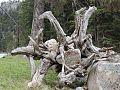 Sculpture naturelle.jpg